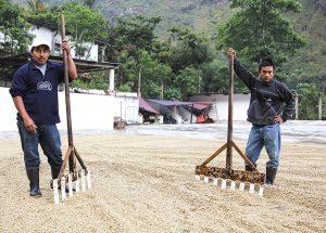 Specialty Coffee Guatemala